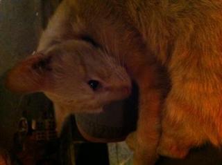 cat_in_hatyai.jpg